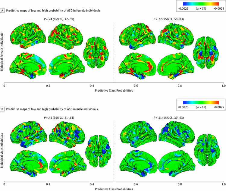 Image shows different areas higlighted in a 'typical' male and female brain.