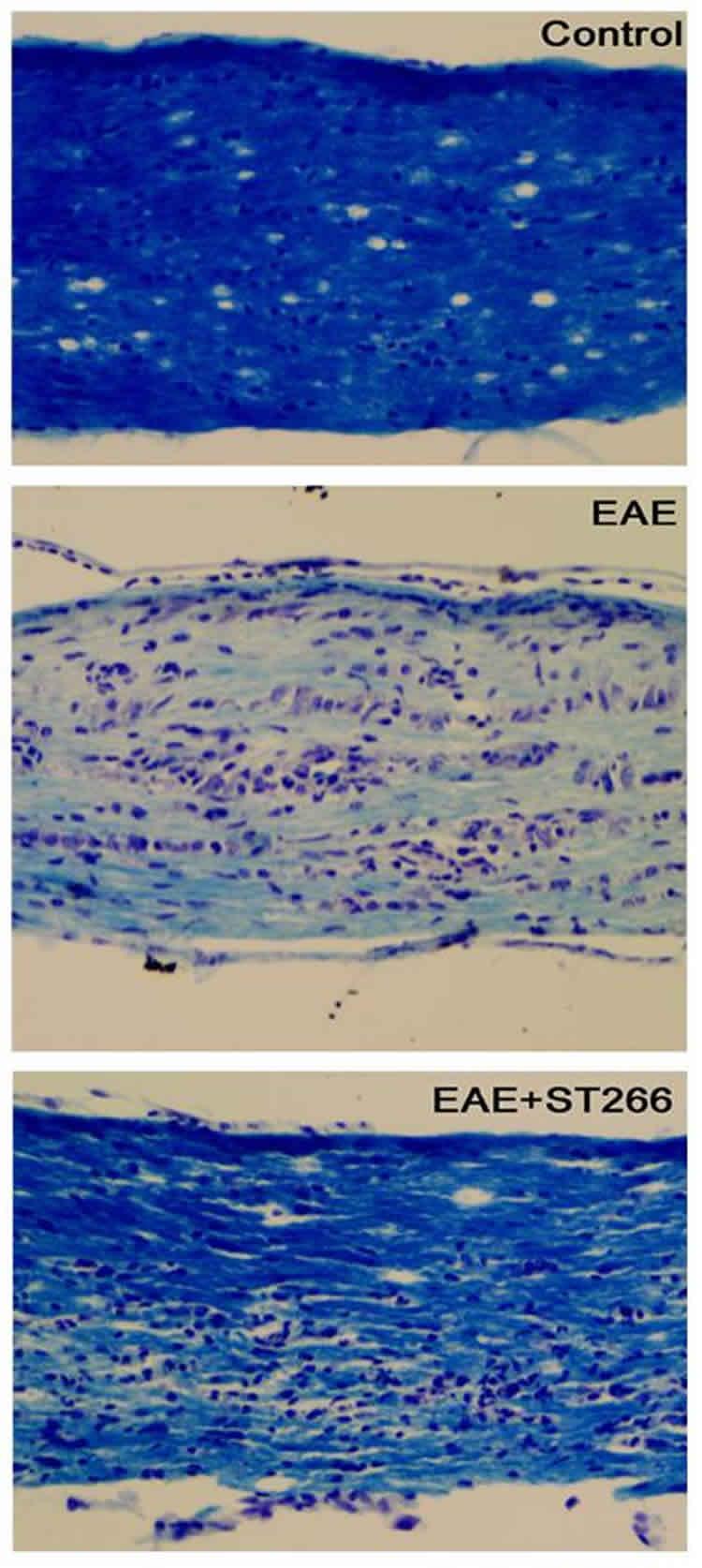 retinal cells