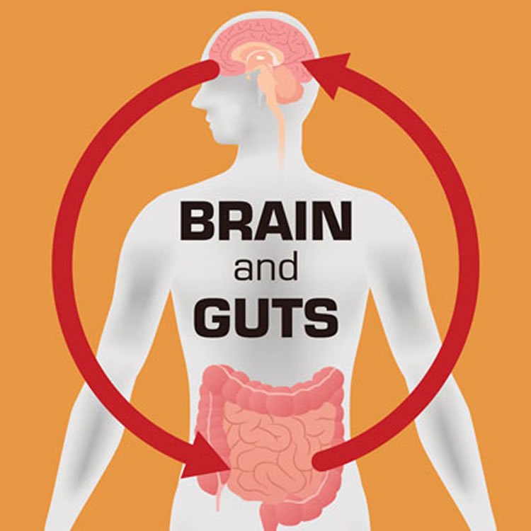 Image shows a diagram of the gut brain axis.