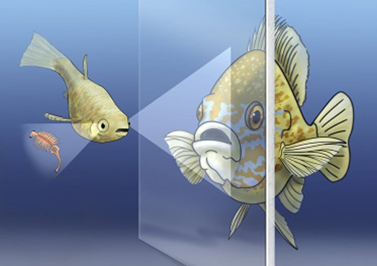 Image shows two fish.