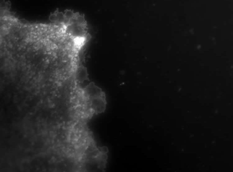 Image shows vesocles being released by astrocytes.