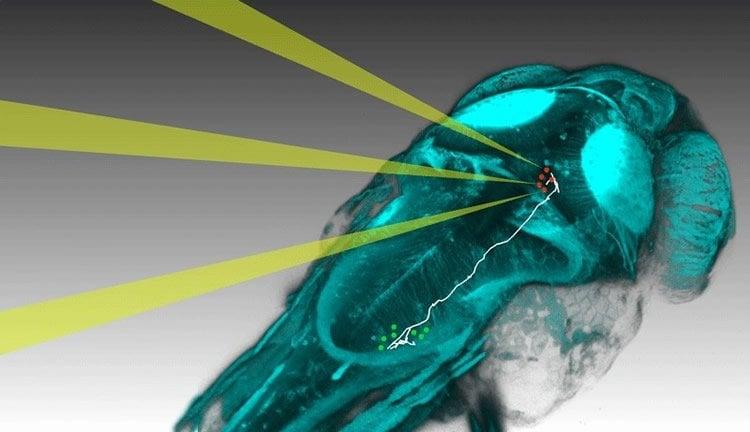 Image shows light hitting neurons.