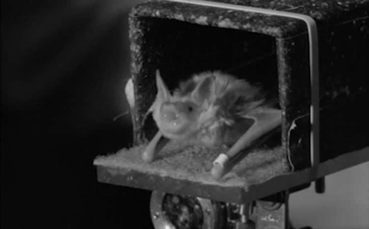 Image shows a bat.