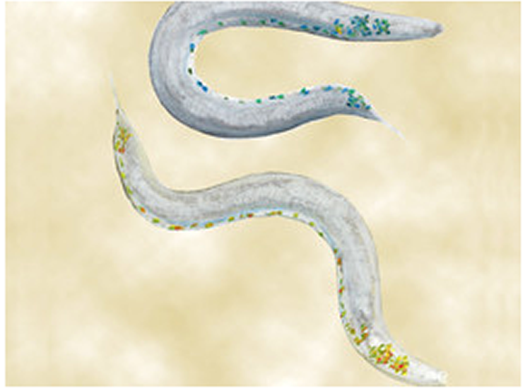 Image shows 2 worms.