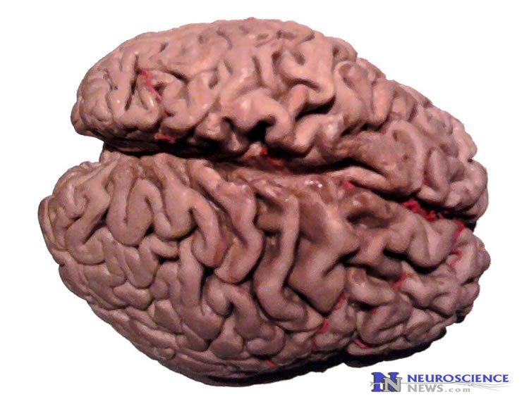 Dementia: New Substance Improves Brain Function