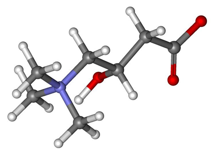 Image shows a stick and ball model of carnitine.