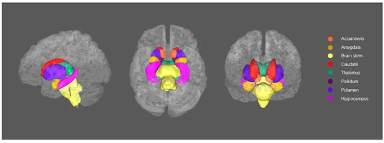 Depression Changes Structure of the Brain