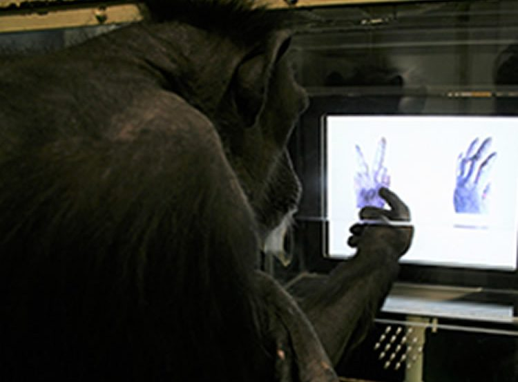 Image shows a chimp playing the game.