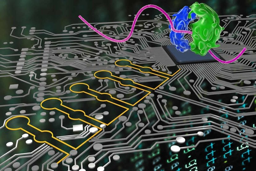 Image shows a computer board and cells.