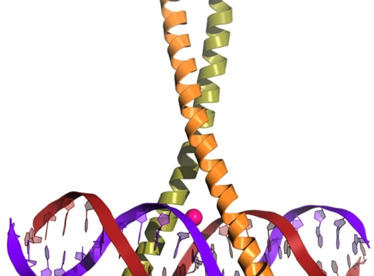 Image shows the CREB protein.
