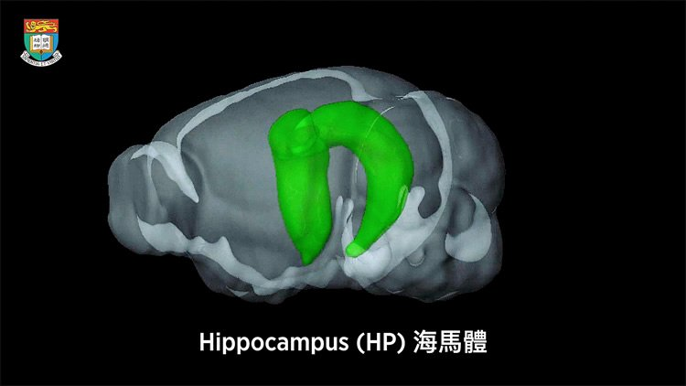 New Functions Of The Hippocampus Unveiled Neuroscience News