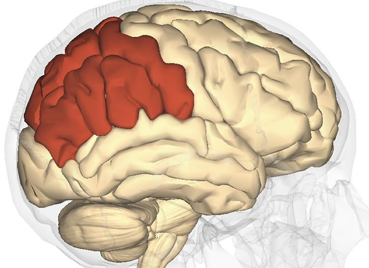 the location of the parietal lobe.