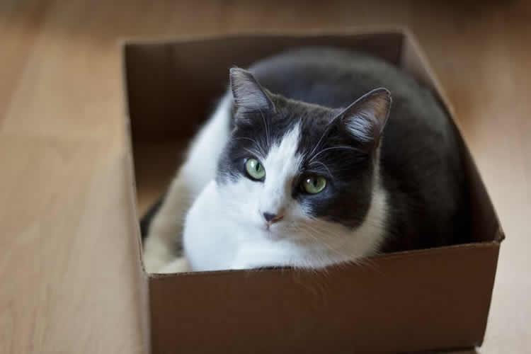 cat in a bix