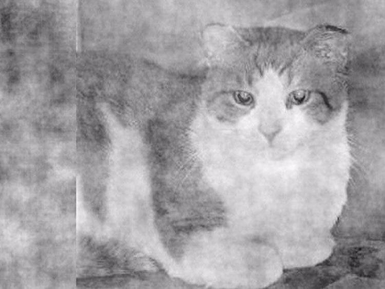 Image shows a cat.