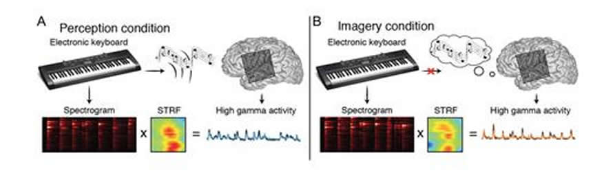 Image shows a keyboard and a brain.