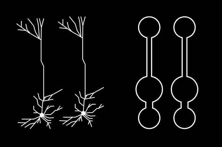 Image shows nodes and neurons.
