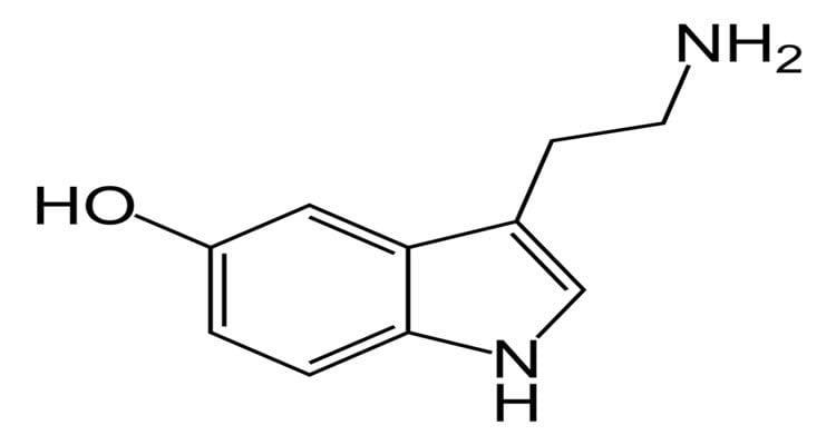 Image shows a stick model of serotonin.