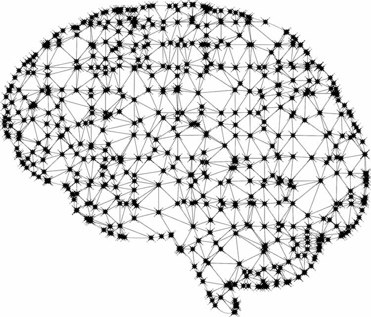 a brain network
