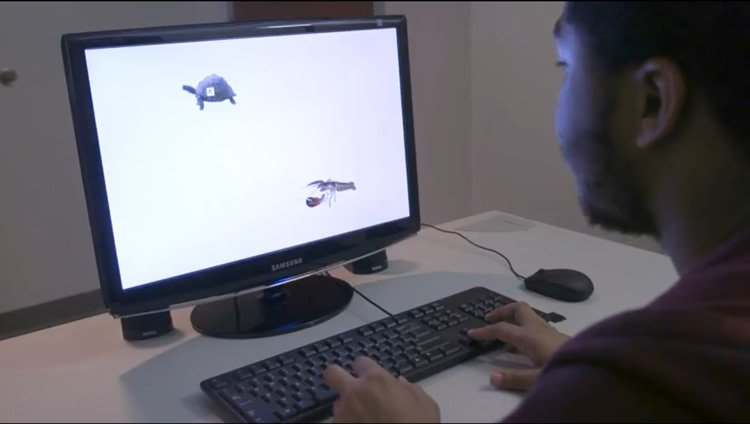 a person looking at a computer screen