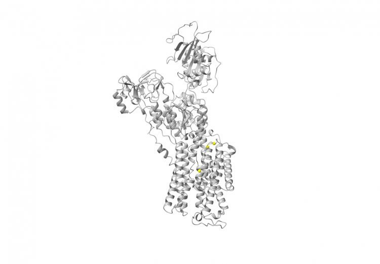 the ATP1A3 gene structure