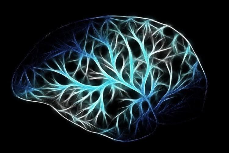 a brain made of neurons