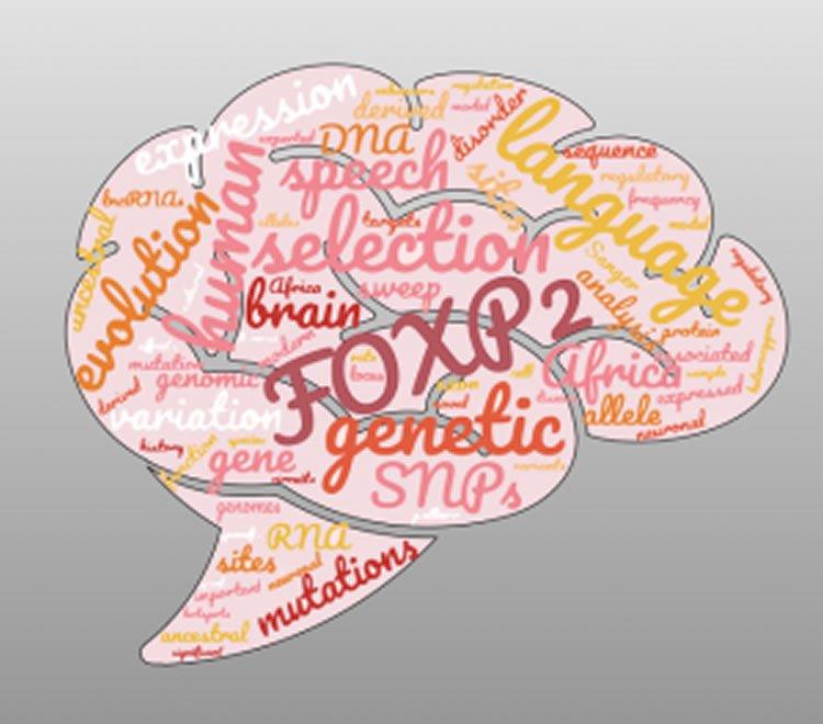 a brain with foxp2 written on it