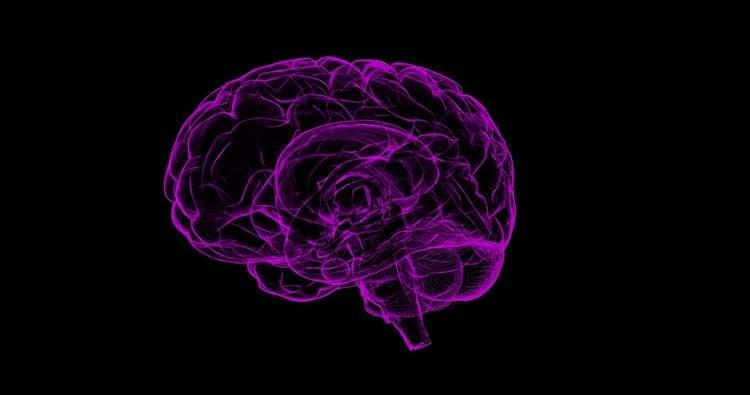 a purple brain