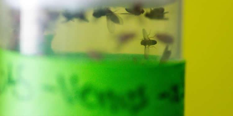 flies in a jar