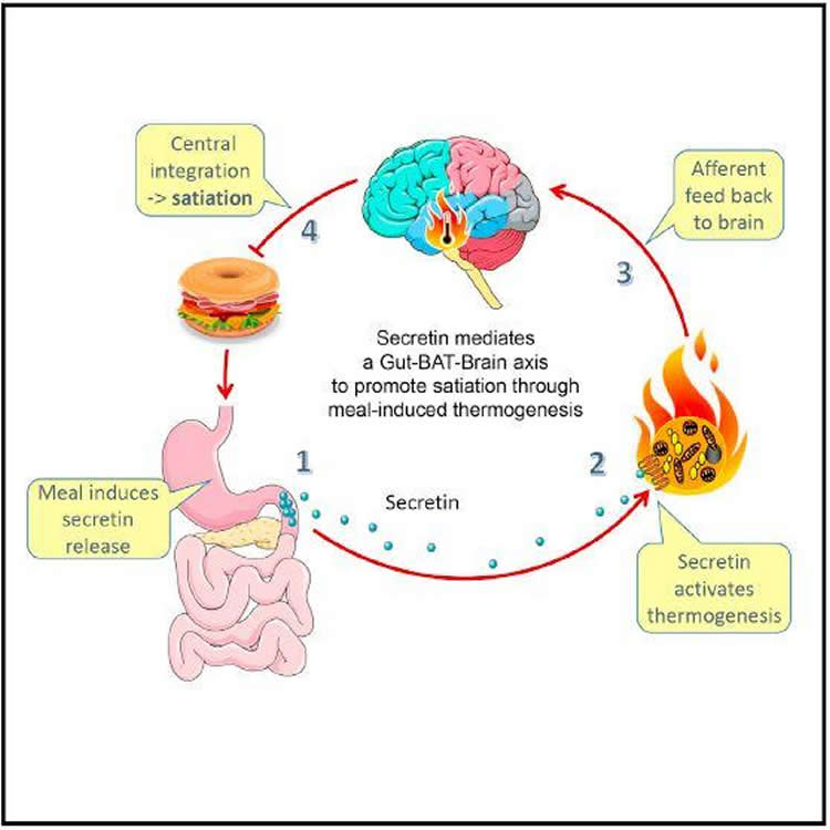graphical abstract for the study