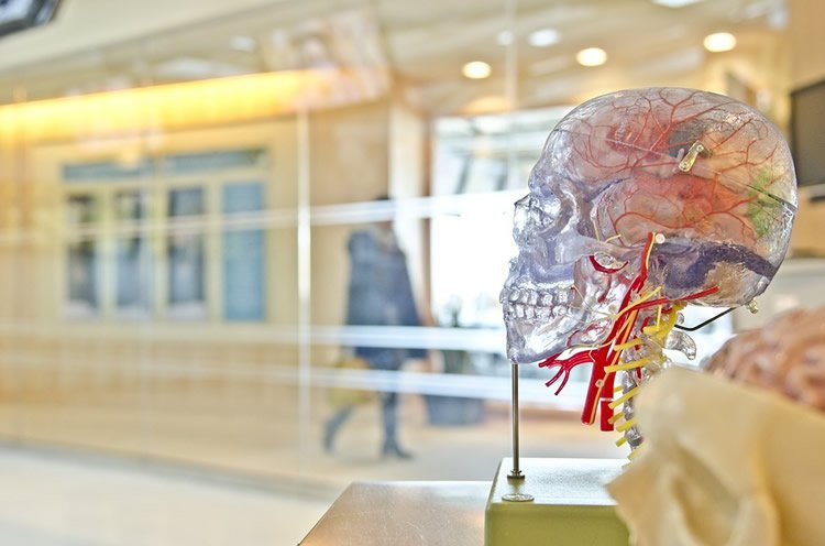 a head with the cerebral blood system