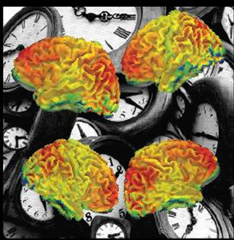 clocks and brains