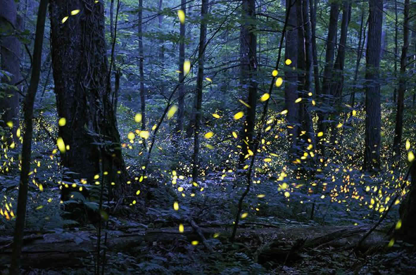 Fireflies are shown.