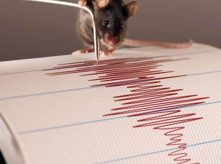 a rat on a graph