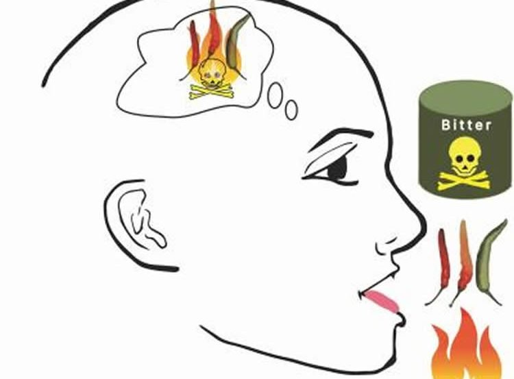 a diagram showing how pain and taste converge in the brain