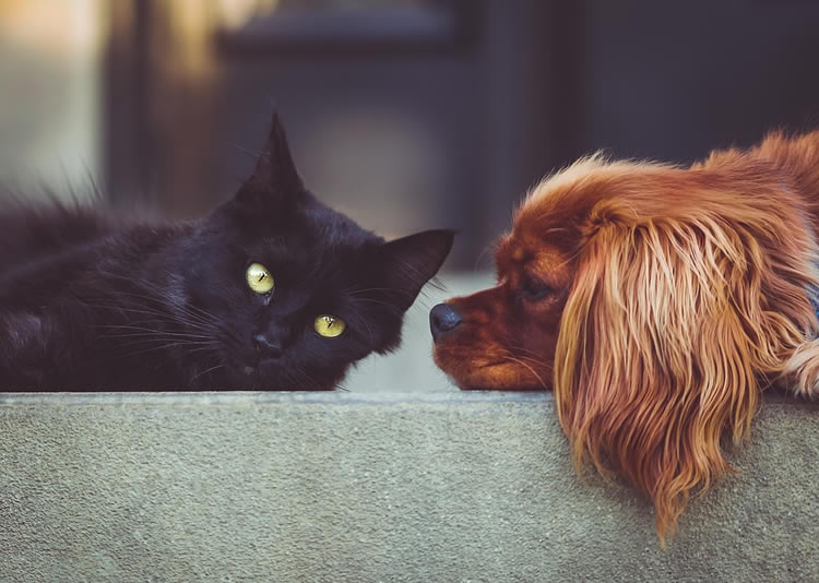 This shows a black cat laying next to a cute puppy