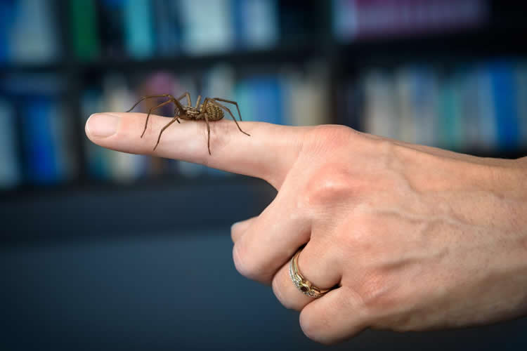 This shows a spider crawling on a person's hand