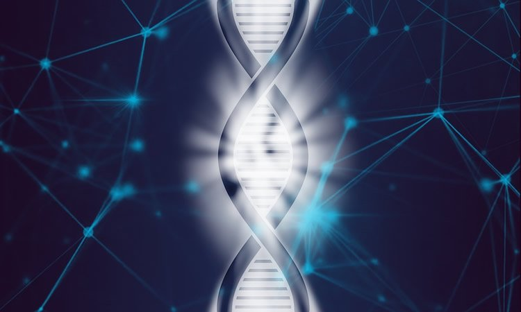 This shows a dna double helix being split apart
