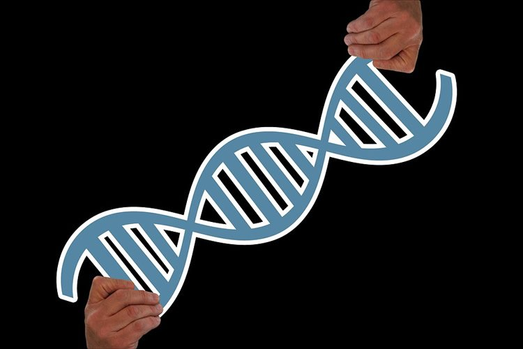 This shows two hands holding a DNA double helix