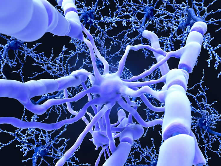 This shows myelin on neurons