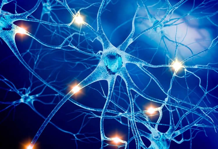 This shows a picture of neurons