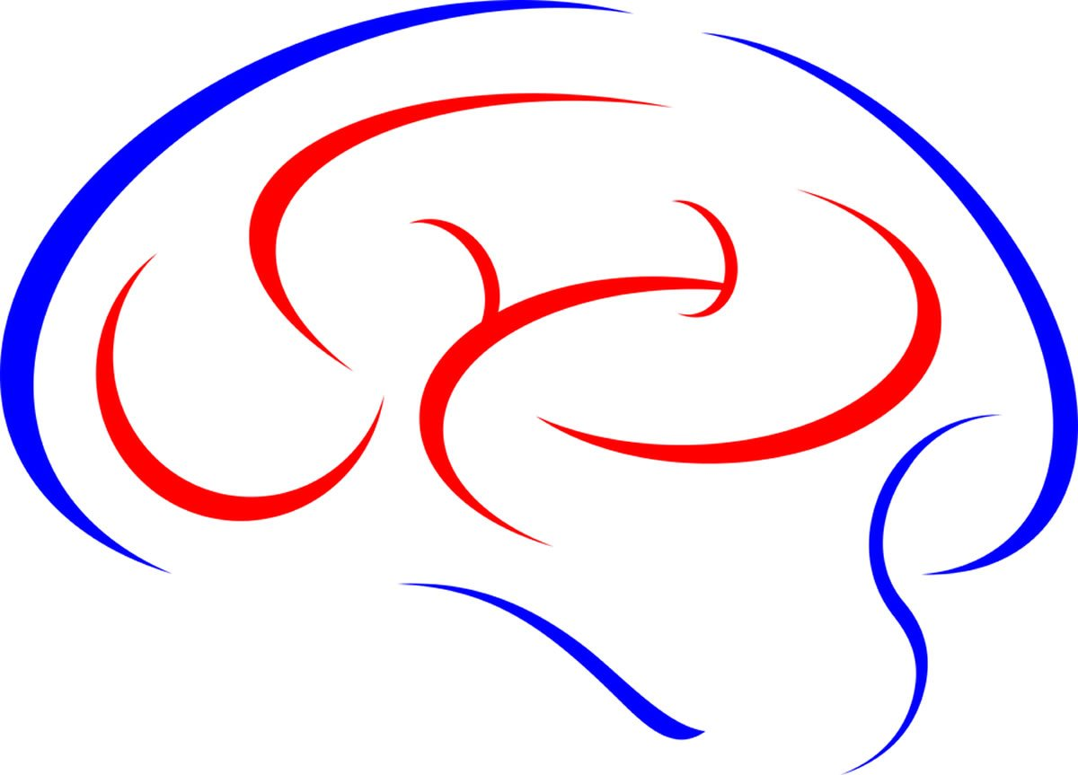 A drawing of a brain is shown here