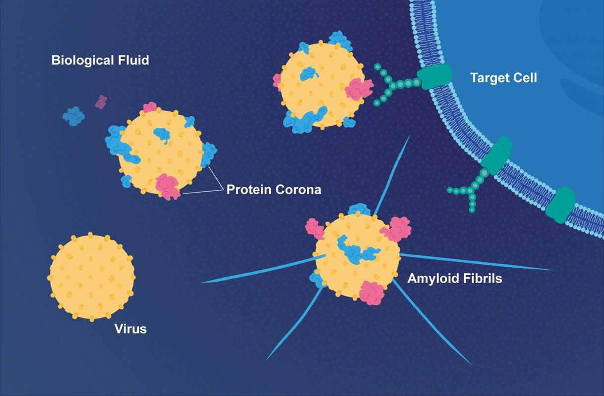 This is a diagram of the viral proteins