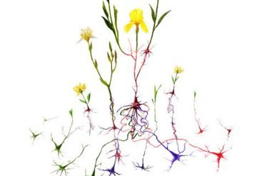 This shows neurons and flowers