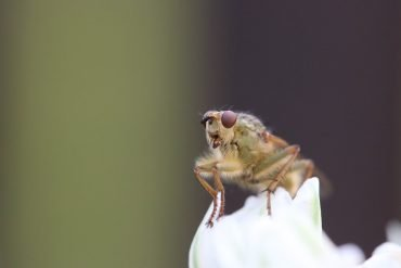 This is a fruit fly