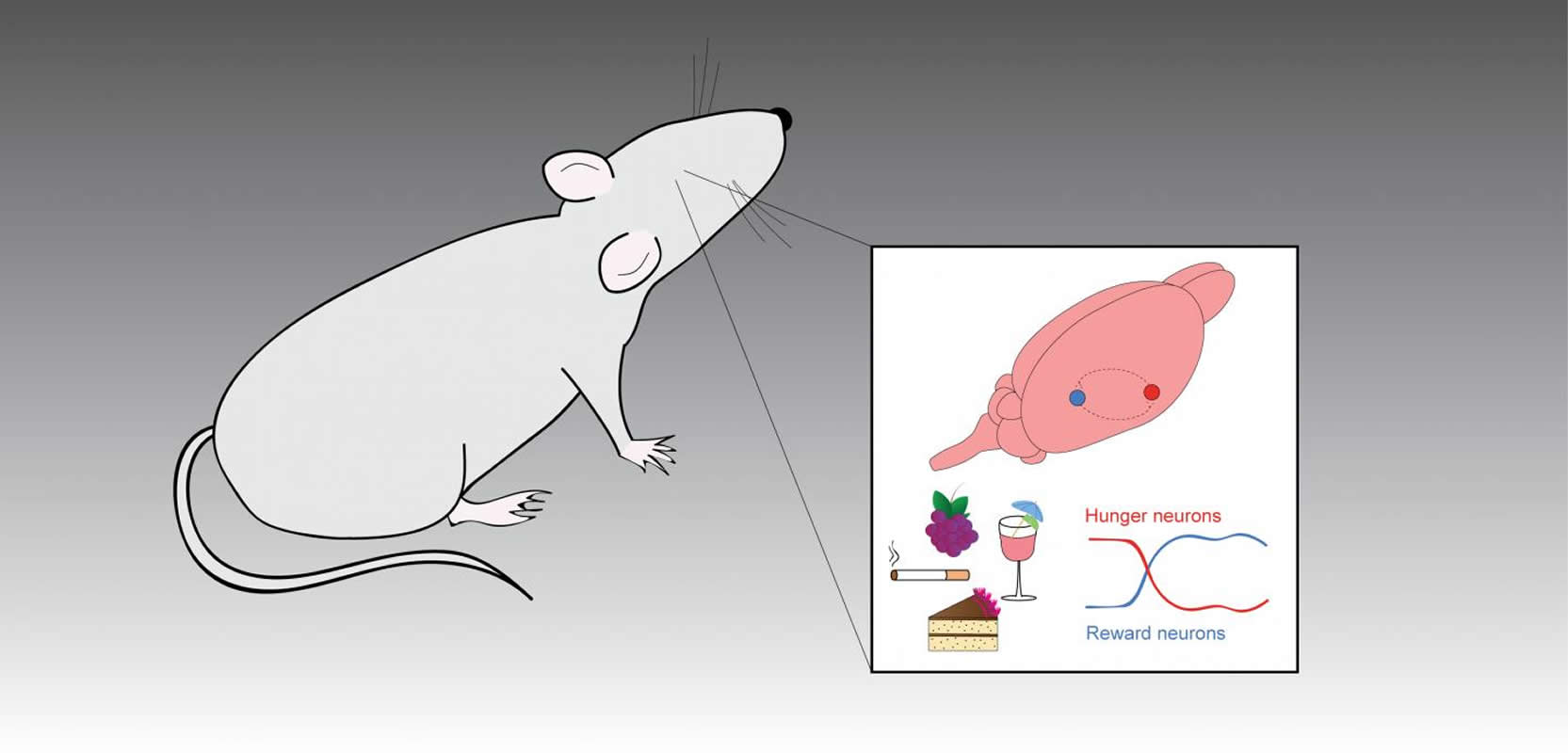 This shows a mouse and a diagram of a mouse brain