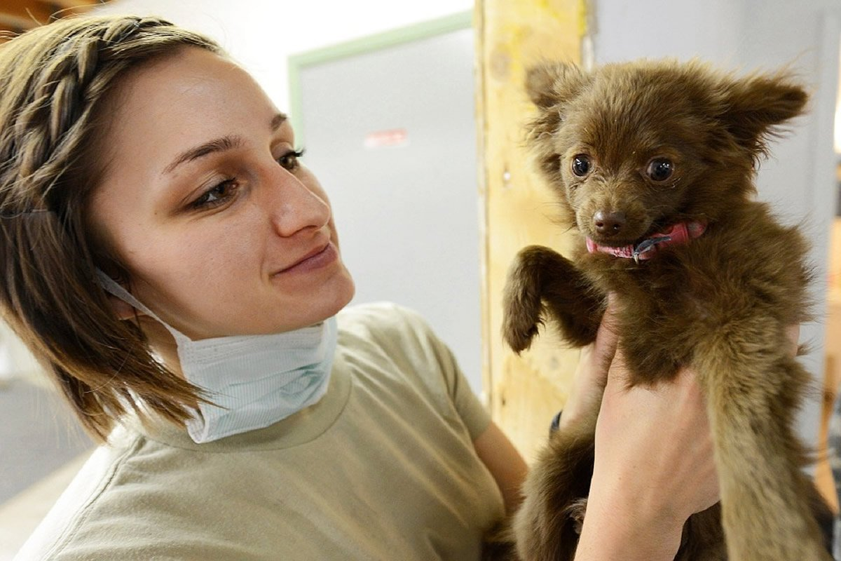 This shows a vet with a puppy