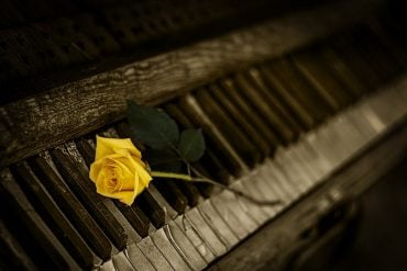 This shows a piano with a rose
