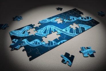 This shows a dna jigsaw puzzle
