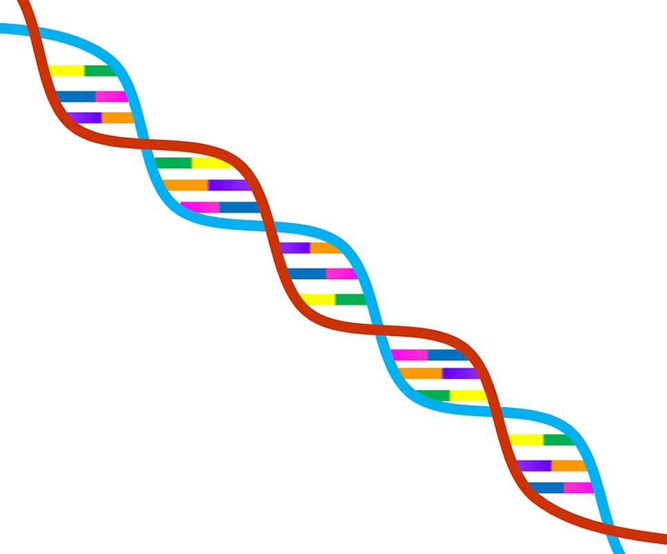 This shows a rainbow DNA double helix