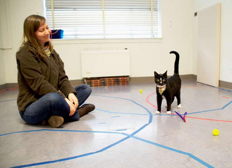 This shows the researcher and a very cute, black and white cat